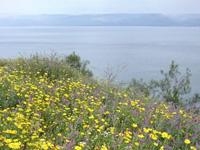 Flores de Galilea