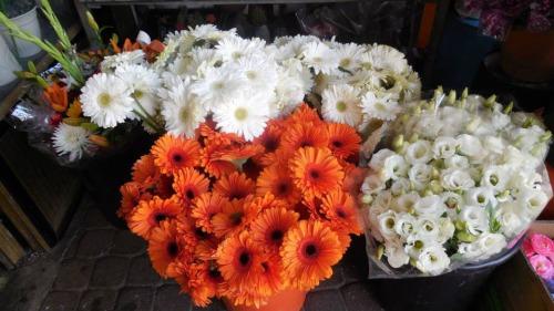 Flores Ashdod