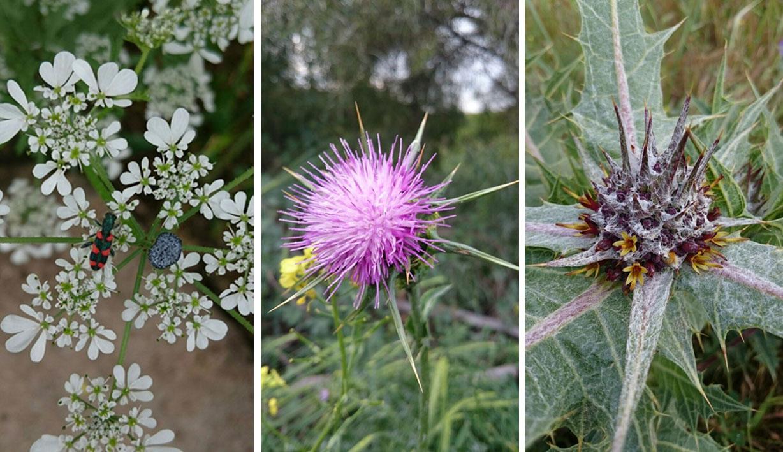 Flores de Galilea Yonatan Gan-El