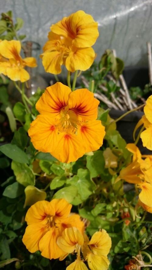 Flores de Galilea - Yonatan Gan-El